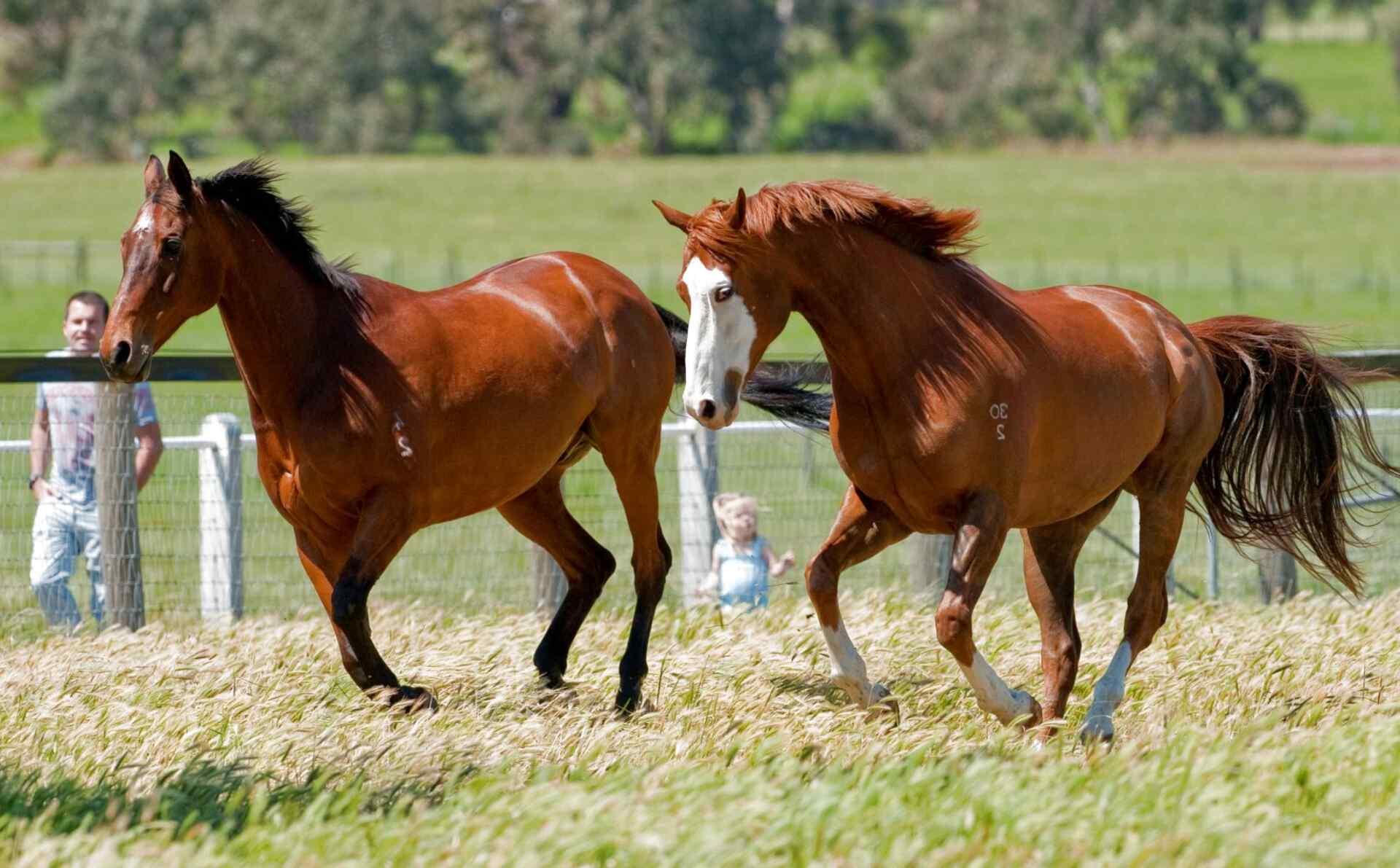 caballos de segunda mano